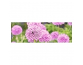 Kunstdruck Pink Meadow 120x40, Pro Art